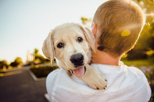 Junge & Hund