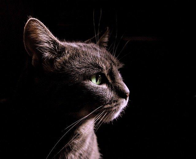 Interessierte Katze