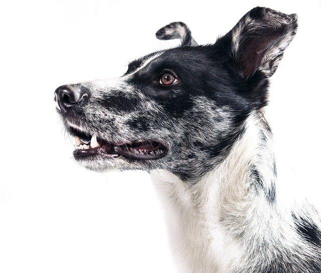 Neugieriger Hund