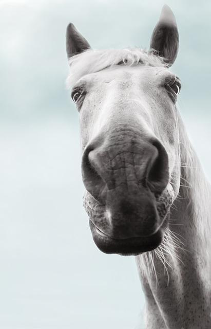 Pferd von unten Fotografiert