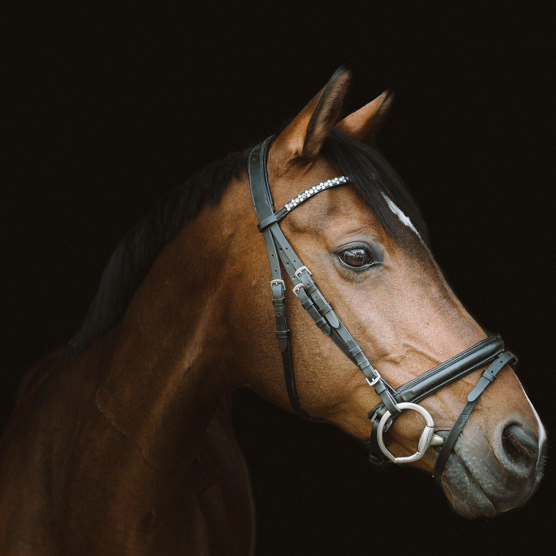 Interessiertes Pferd