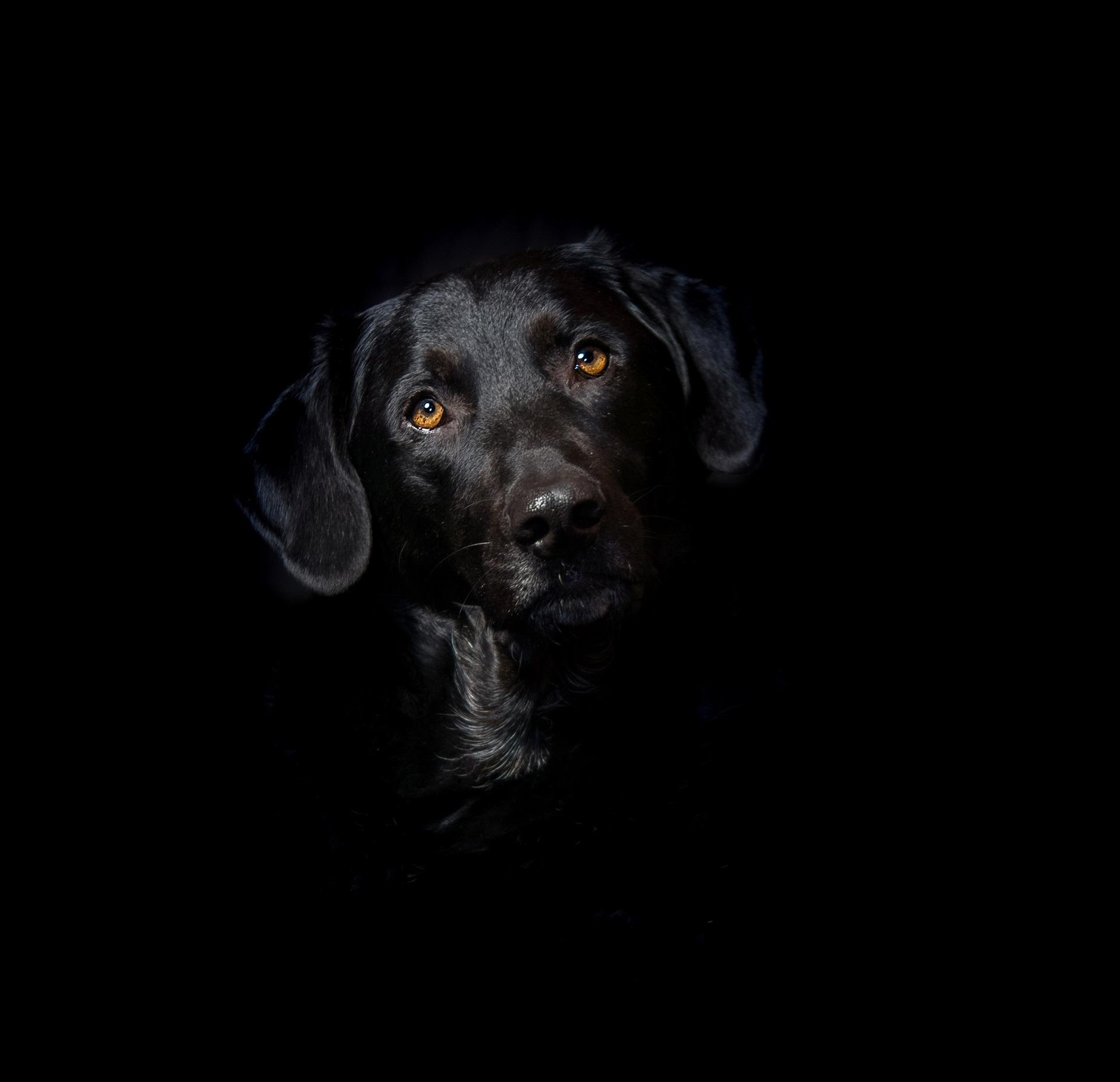 Hund blickt traurig